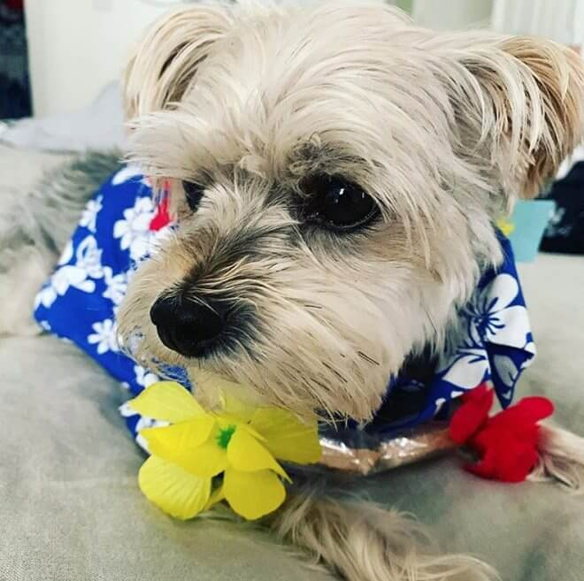 180 Great Hawaiian Dog Names with Meanings - The Paws