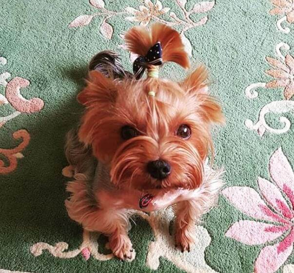 Best Pet Names For Girlfriend: Top 120 Small Dog Names Perfect For Your Little Girl Puppy