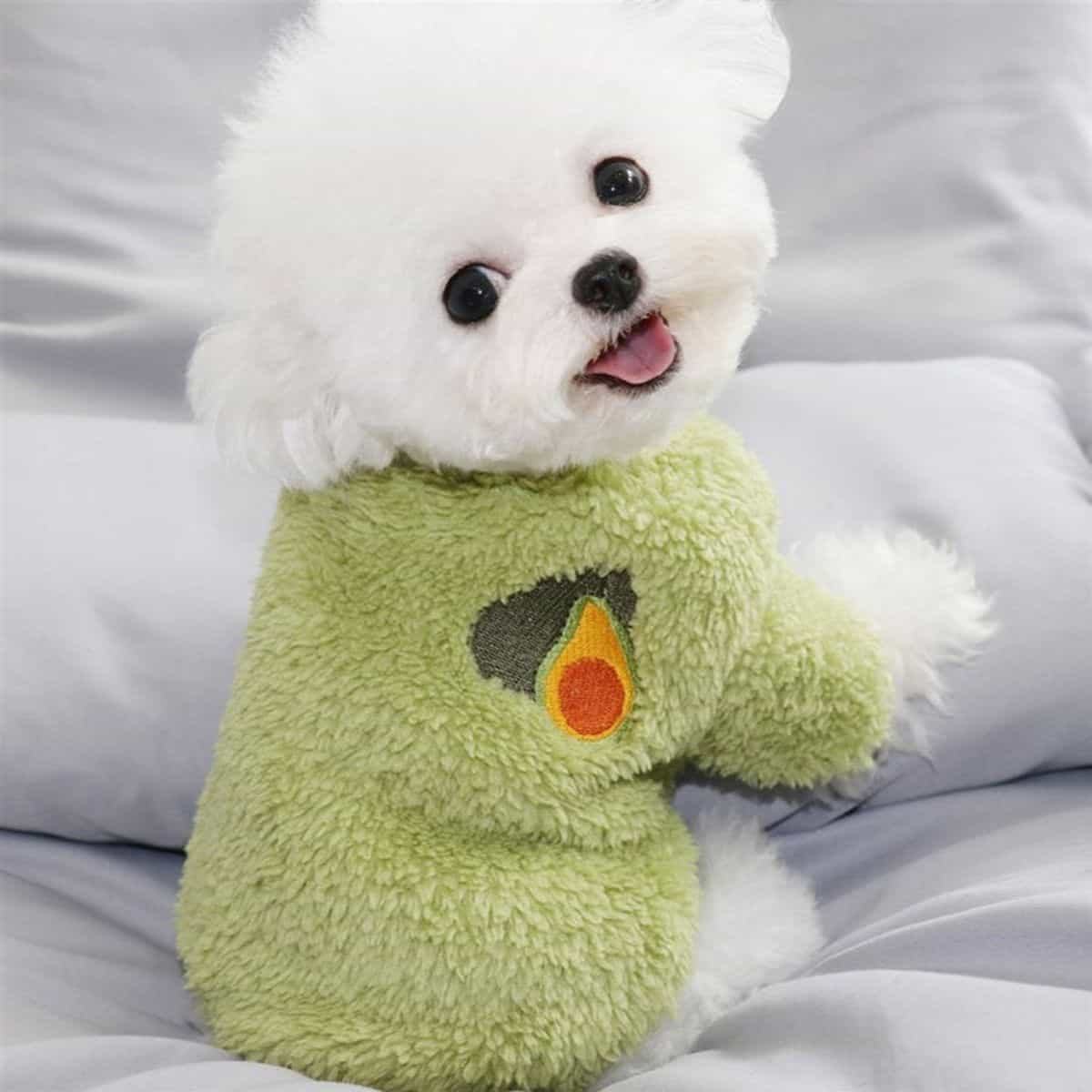 winter cloth for dogs