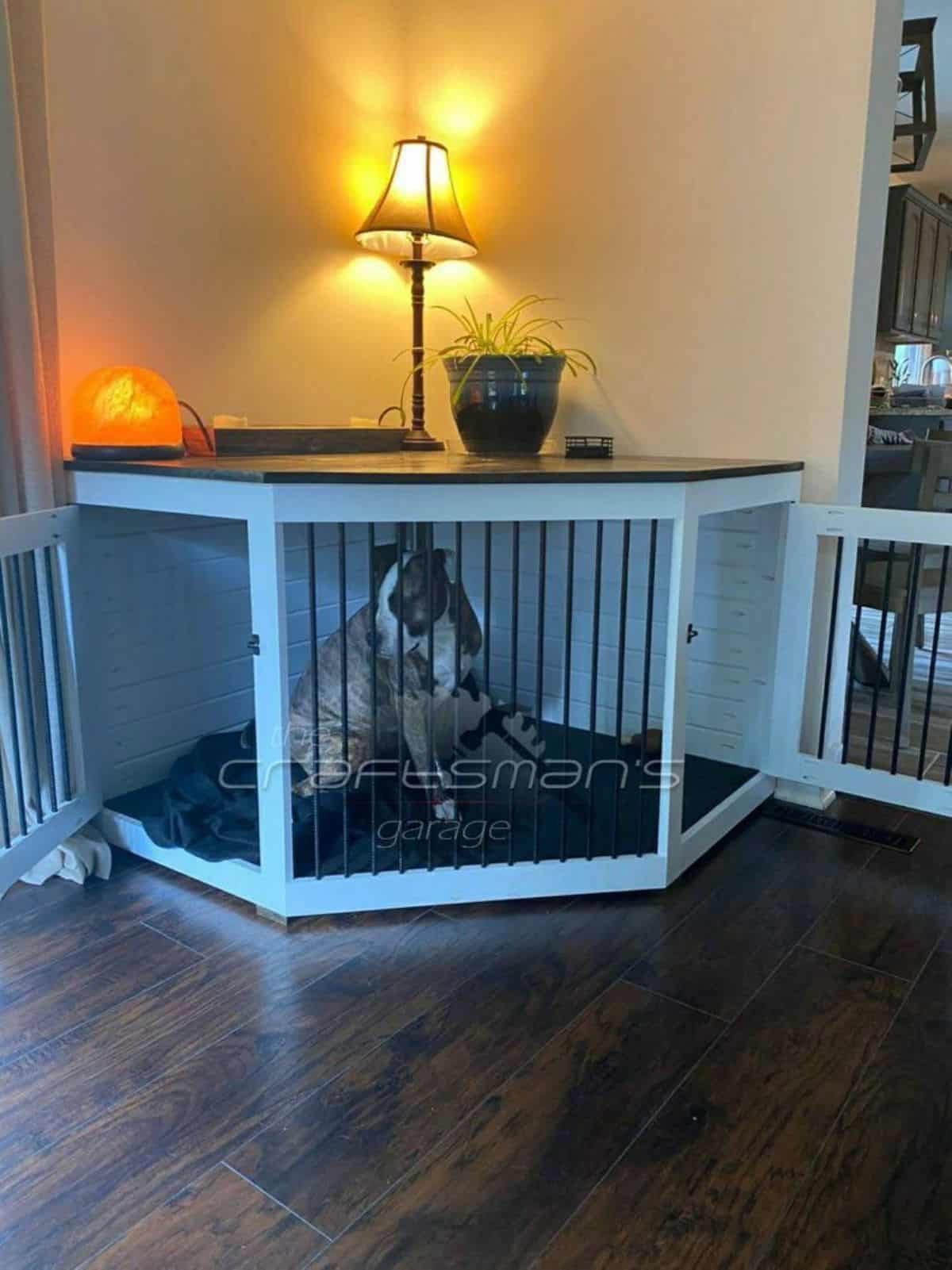 blue corner dog crate idea