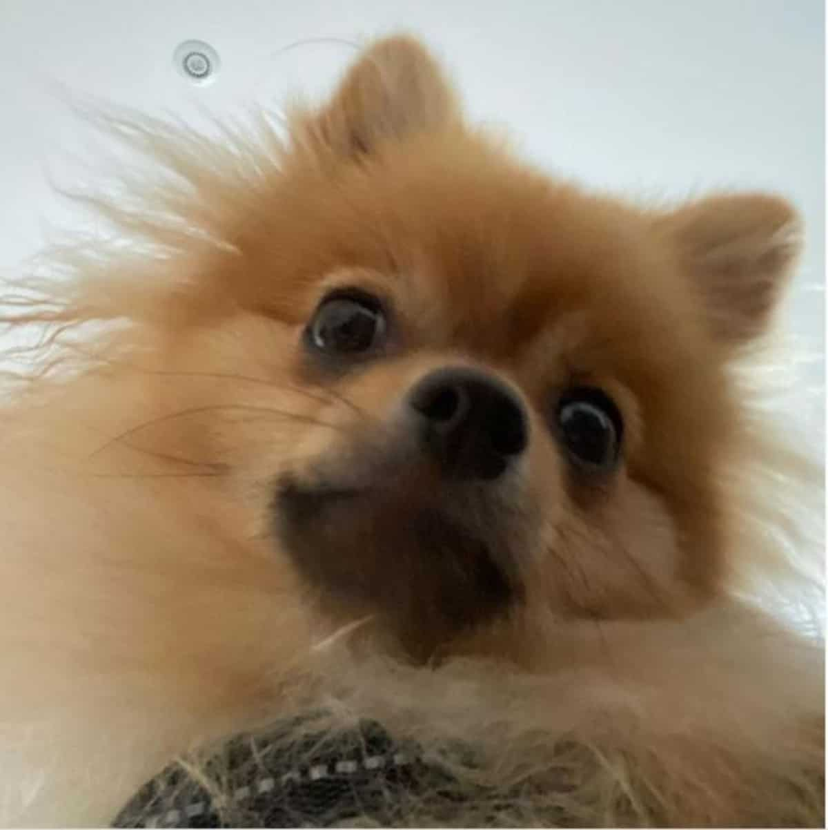 *pom caught in front camera