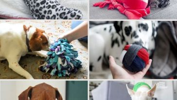 images of dog playing with toys