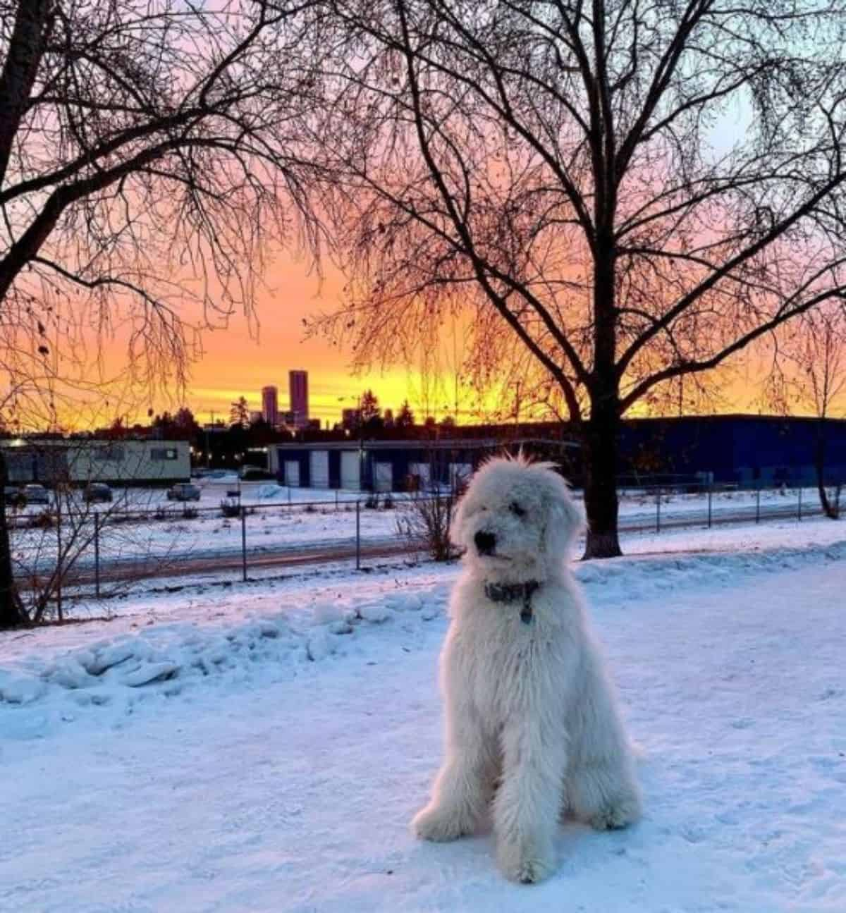 dog and a beautiful sunset and the snow