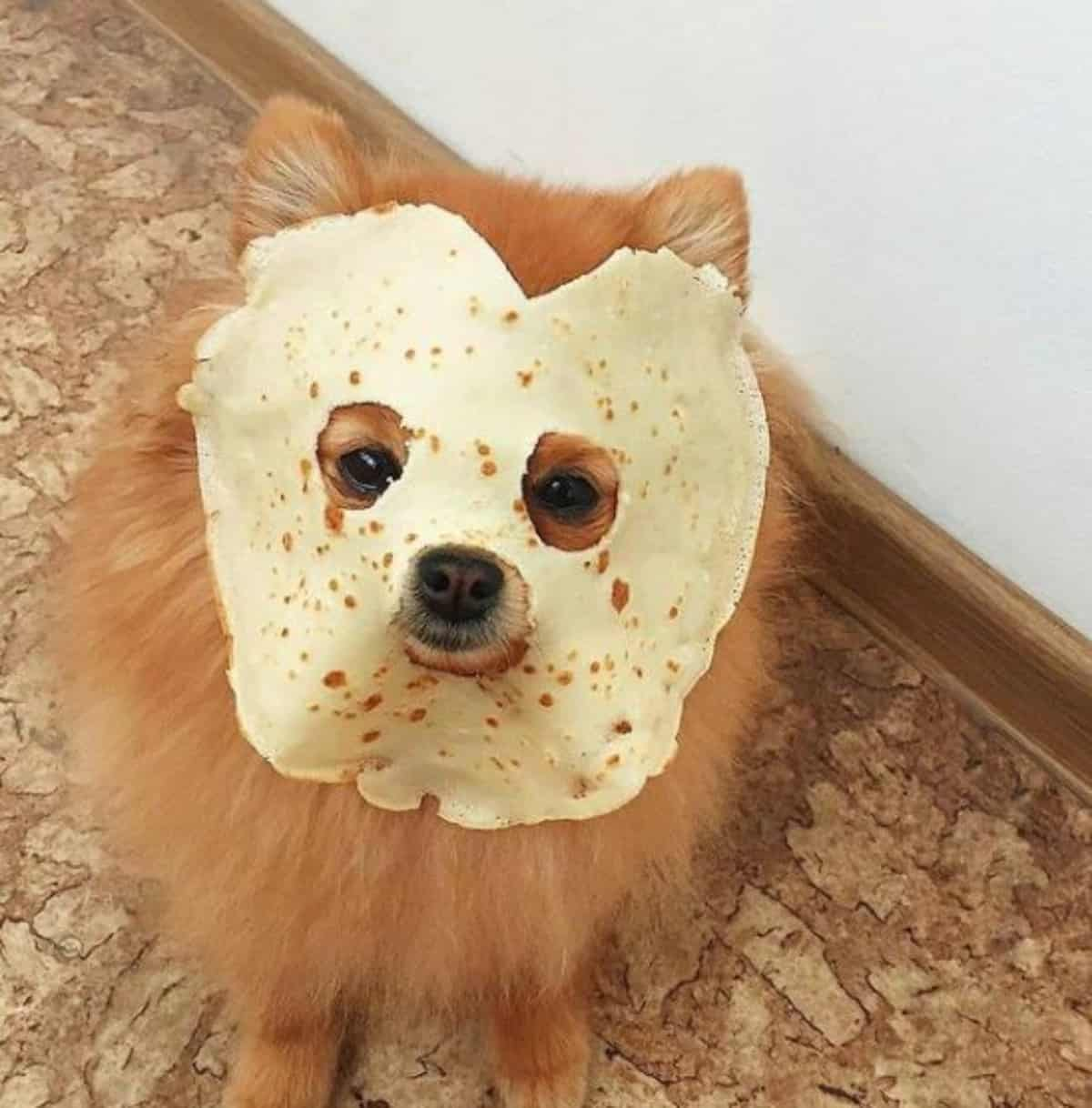 *funny pom with taco wrap in the face